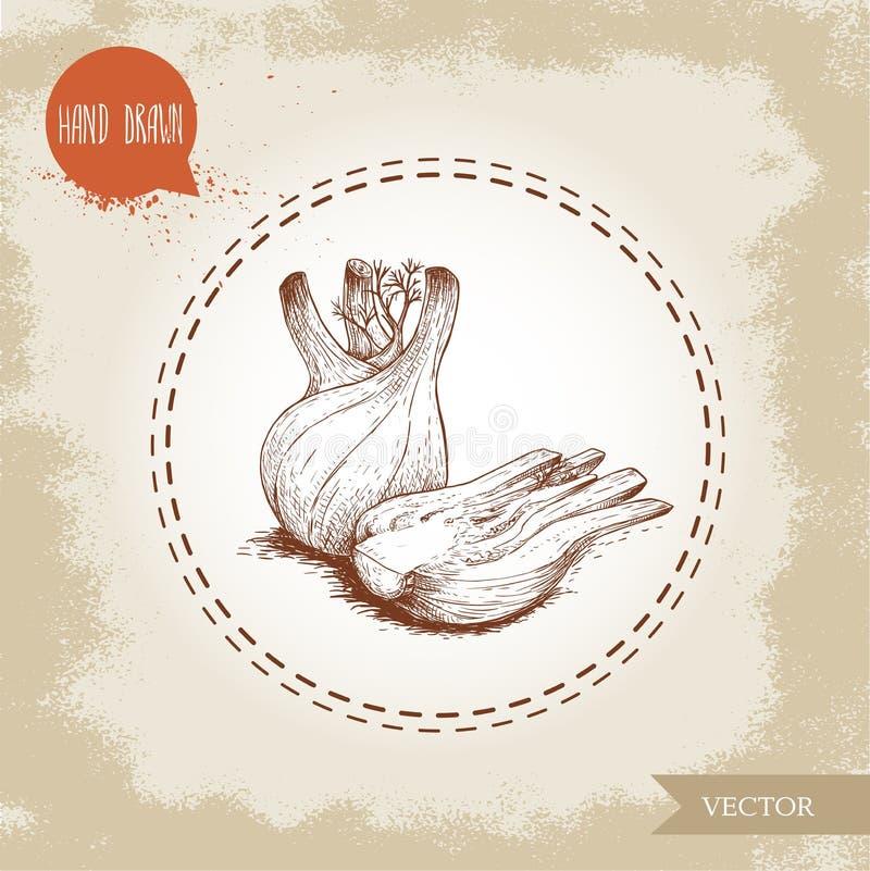 Den drog handen skissar fänkålkulor Kryddigt rota växten med sidor Ört-, krydda- och smaktillsatsvektorillustration vektor illustrationer