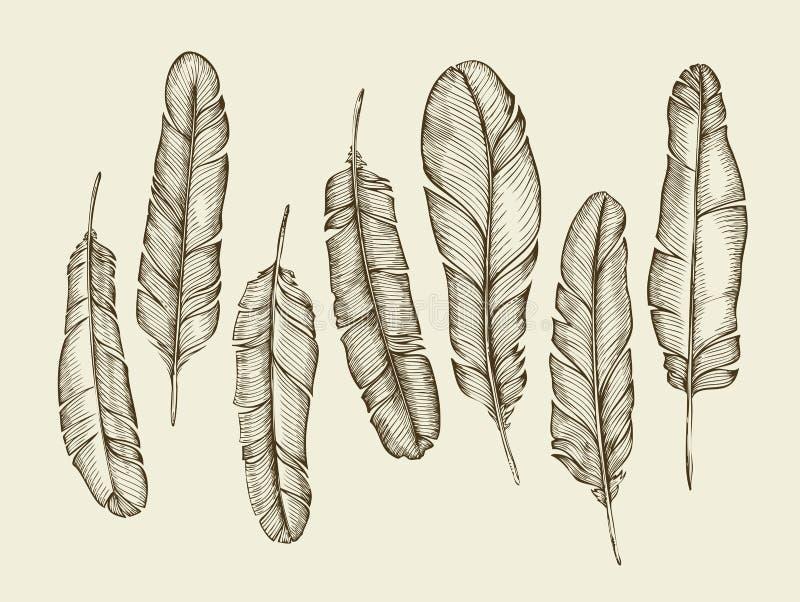 Den drog handen skissar fjädrar, fjäderdräkt, ludd tappninghandstilfjäder också vektor för coreldrawillustration stock illustrationer