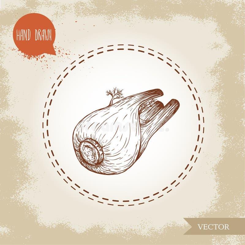 Den drog handen skissar den hela fänkålkulan Kryddigt rota växten med sidor Ört-, krydda- och smaktillsatsvektorillustration stock illustrationer