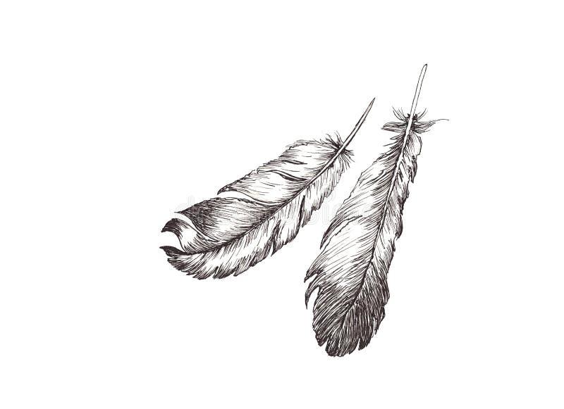 Den drog handen skissar illustrationen med eyeliner av fågelfjädrar på vit bakgrund vektor illustrationer