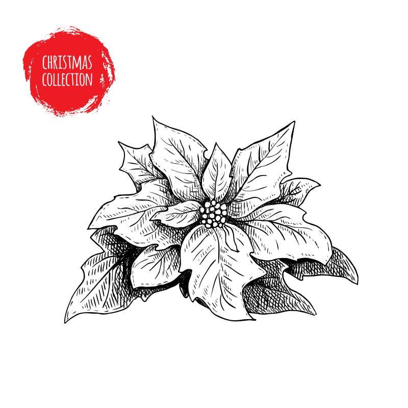 Den drog handen skissar julstjärnan Säsongsbetonad blomma för jul Symbol för vinterferie vektor illustrationer