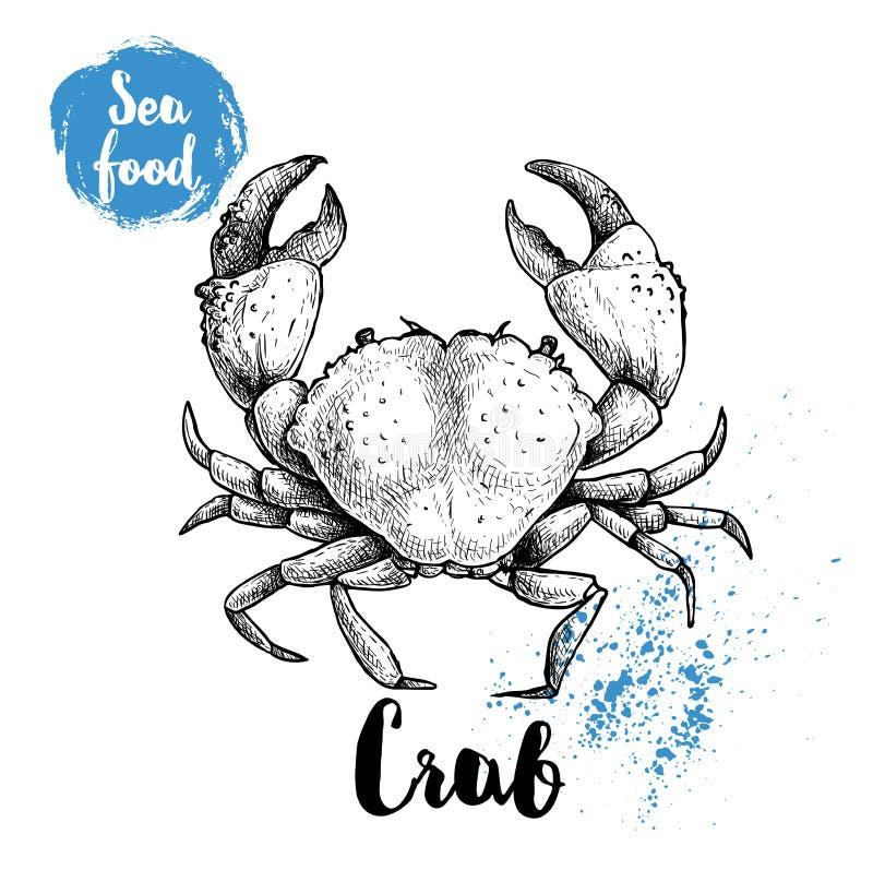 Den drog handen skissar krabban med stora jordluckrare Havs- vektorillustration stock illustrationer