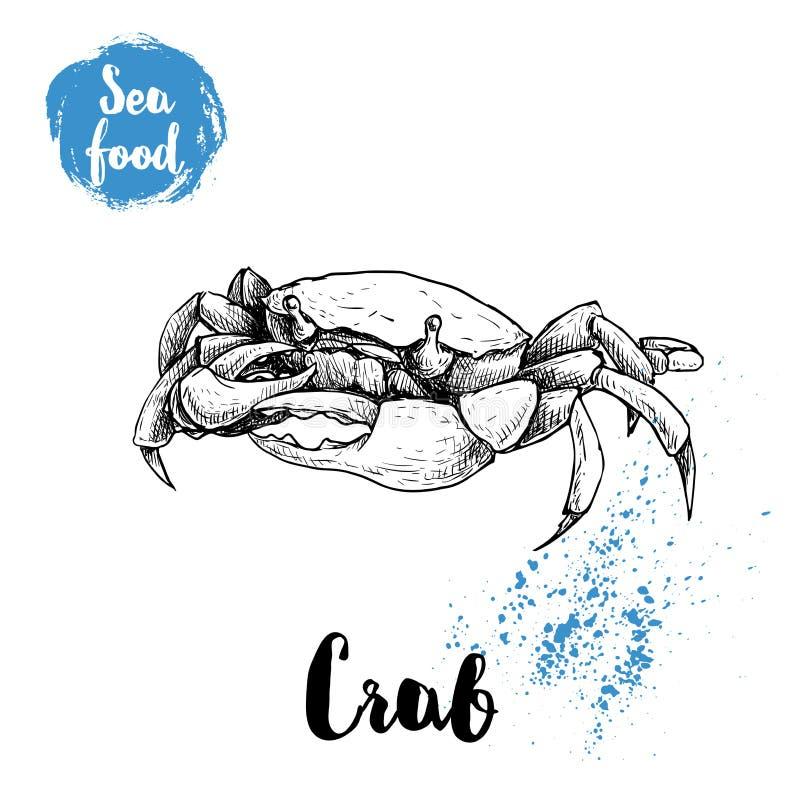 Den drog handen skissar krabban Skaldjur och djurliv sean och illustration för havdjurvektor vektor illustrationer