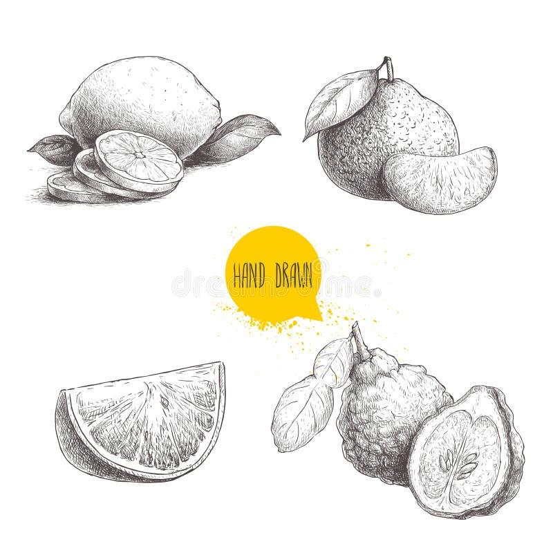 Den drog handen skissar stilcitrusfruktuppsättningen Halv citron, limefrukt, tangerin, mandarinsammansättning, apelsiner och berg stock illustrationer