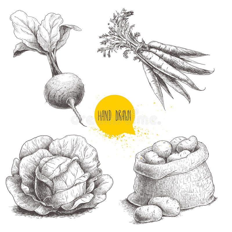 Den drog handen skissar stilgrönsakuppsättningen Kål beta rotar med blad, plundrar med potatisar och gruppen av moroten stock illustrationer