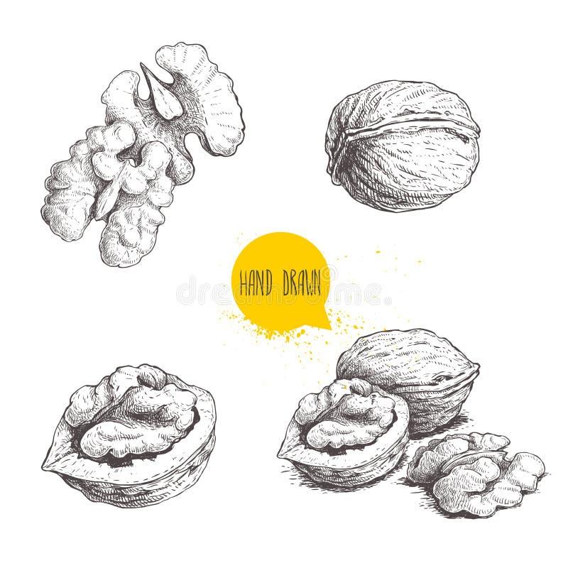 Den drog handen skissar stilvalnötuppsättningen Den enkla helheten, halvan och valnöten kärnar ur Illustration för Eco sund matve stock illustrationer