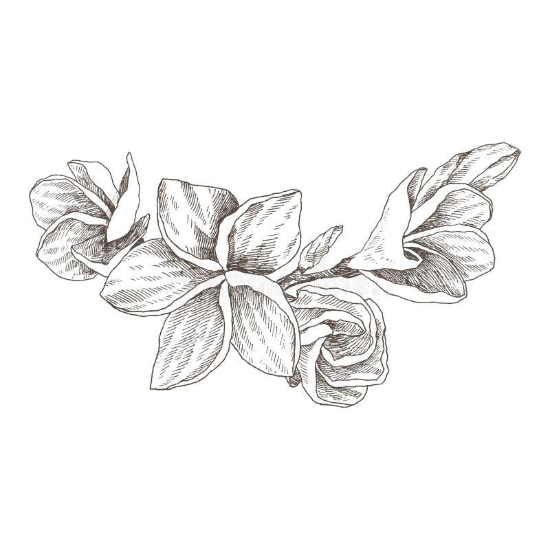 Den drog handen skissar tropisk blommaPlumeria Botanisk illustrationgravyrstil med vattenfärgfläcken förenlig detaljerad för lutn royaltyfri illustrationer
