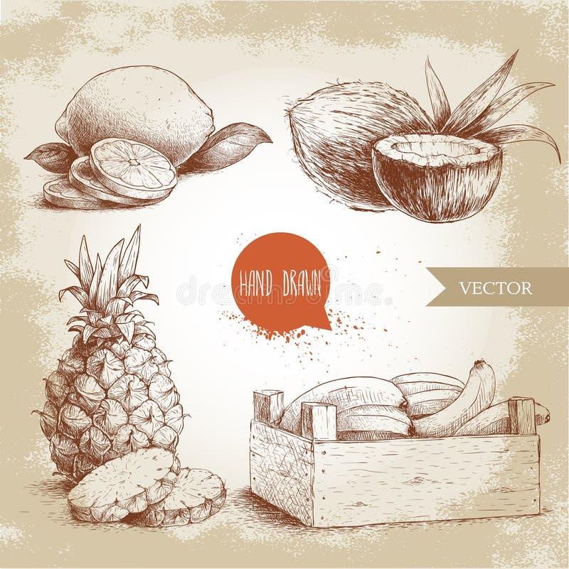 Den drog handen skissar uppsättningen för tropiska frukter för stil Bananer i trä, kokosnötter, ananas med skivor och citroner vektor illustrationer