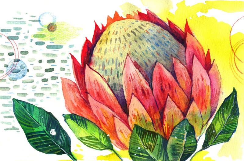 Den drog handen stiliserade vattenfärgillustrationen av proteablomman på dekorativ texturerad bakgrund stock illustrationer