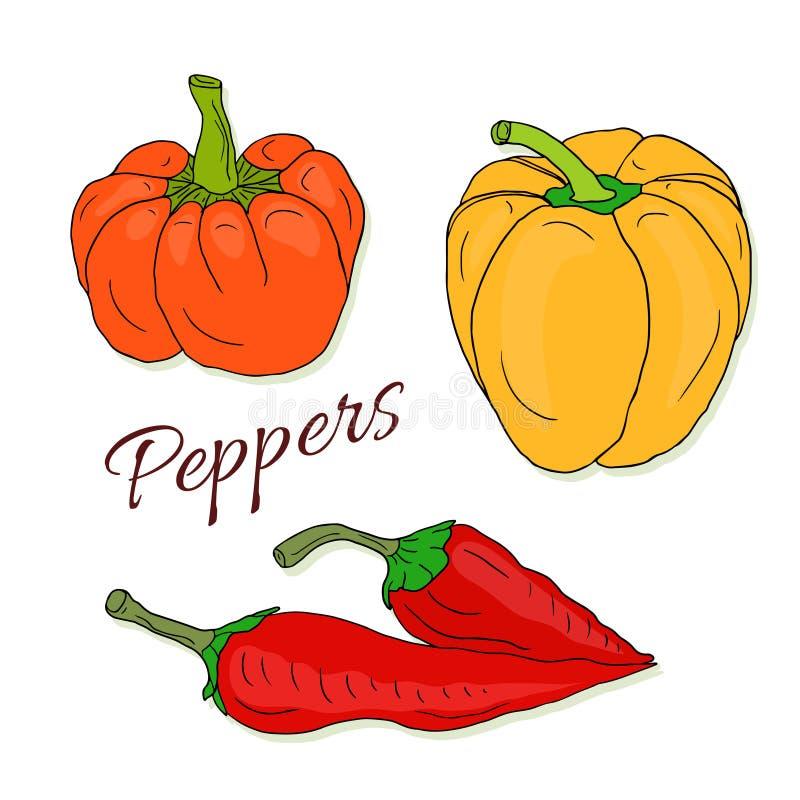 Den drog uppsättningen av vektorhanden skissar peppar Chili och spansk peppar Färgrika grönsaker för vektor stock illustrationer