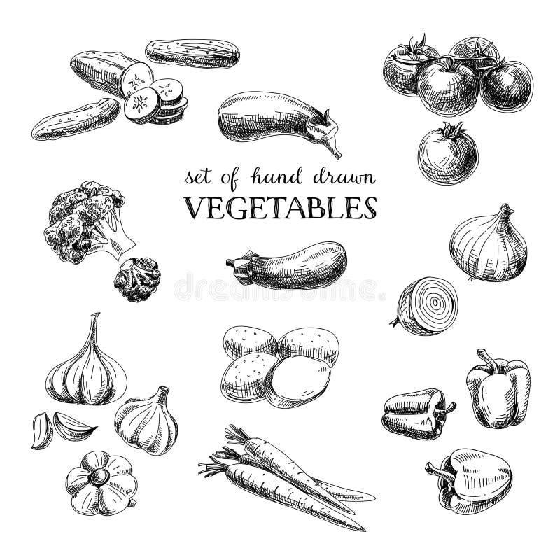 Den drog vektorhanden skissar grönsakuppsättningen Eco foods royaltyfri illustrationer