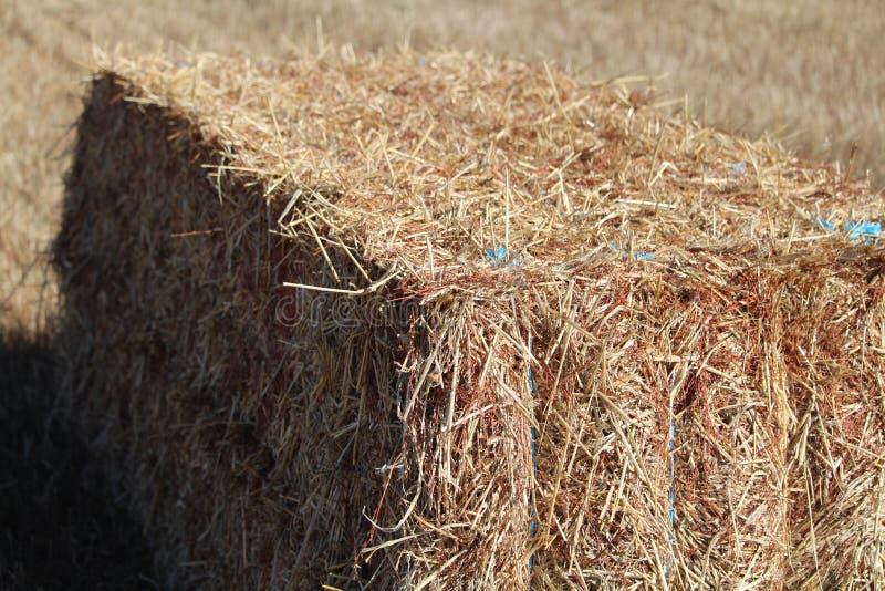 Den dyrbara bilden av ett stycke av sugrör som är klart att lagras royaltyfri foto