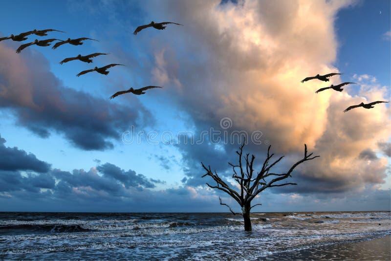 Den Edisto ön, botanik behandla som ett barn stranden royaltyfria foton