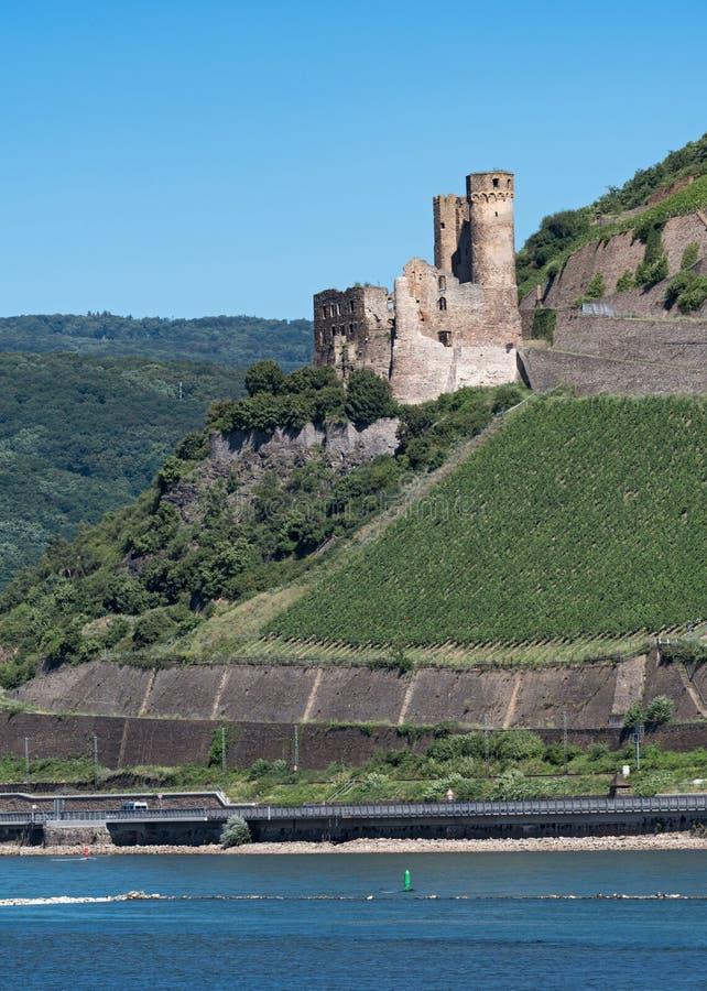 Den Ehrenfels slotten fördärvar på Rhen nära Rudesheim mitt emot Bi royaltyfri bild