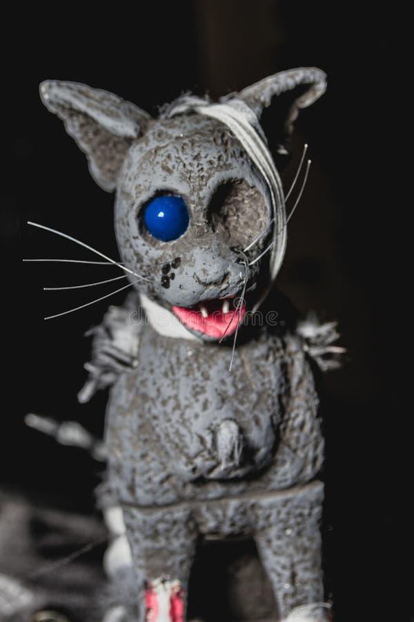 Den enögda katten går mot allhelgonaafton fotografering för bildbyråer