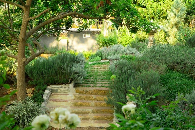 Den engelska stugaträdgården på gräsmattaträdgård för grönt gräs, det infomal landskapet dekorerar med rosor, rosmarinö royaltyfri foto
