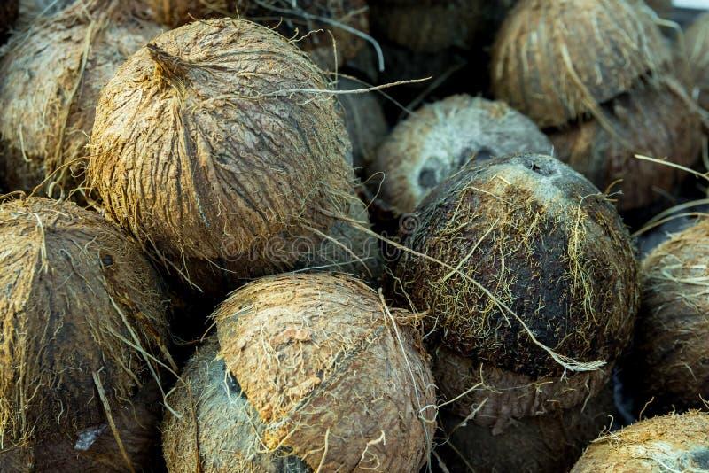 Den enorma högen av sprucket i till hälften tomma kokosnötter beskjuter, skal som samlas för återanvändning, hårig textur för bus arkivbilder