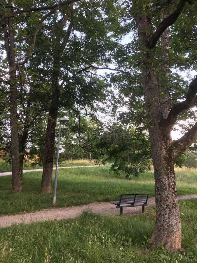 Den ensamma bänken i parkerar royaltyfria bilder
