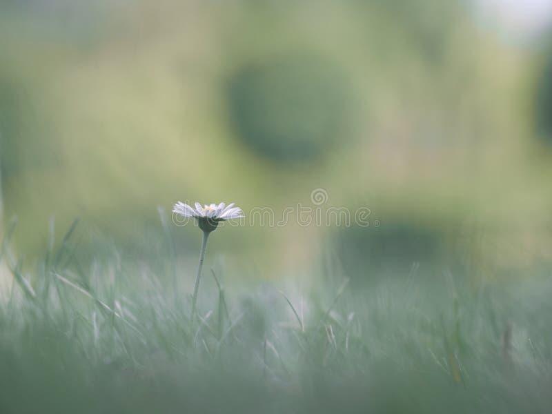 Den ensamma delikata blomman i gräset royaltyfria bilder