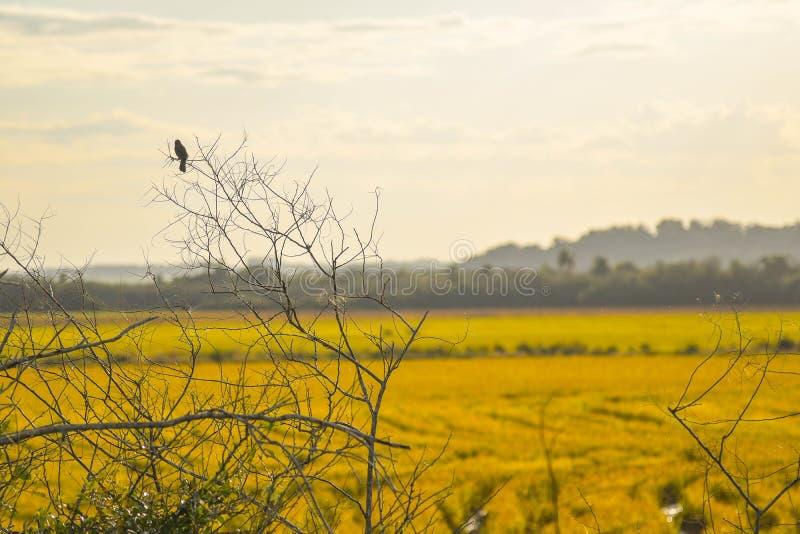 Den ensamma fågeln jpg royaltyfri bild