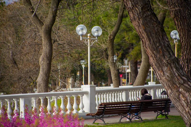 Den ensamma flickan sitter på bänk under enorma träd på härlig stadssjösidapromenad bland gröna gräsmattor royaltyfria bilder