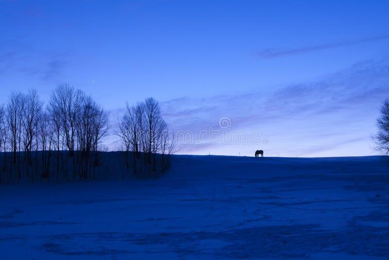 Den ensamma hästen på snö täckte kanten på skymning arkivfoto