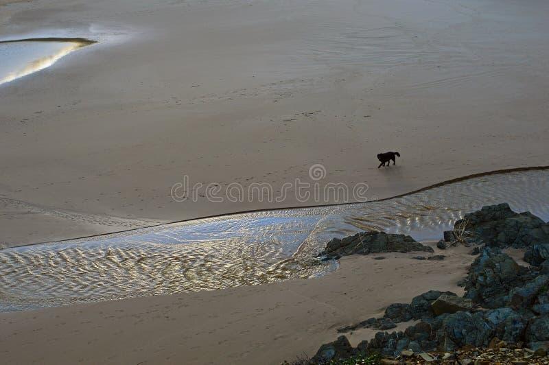 Den ensamma hunden kör stranden royaltyfria foton