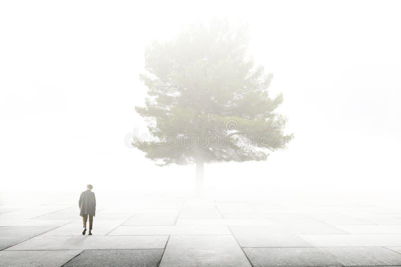 Den ensamma mannen går in mot ett stort träd i en stad som omges av dimma royaltyfri fotografi