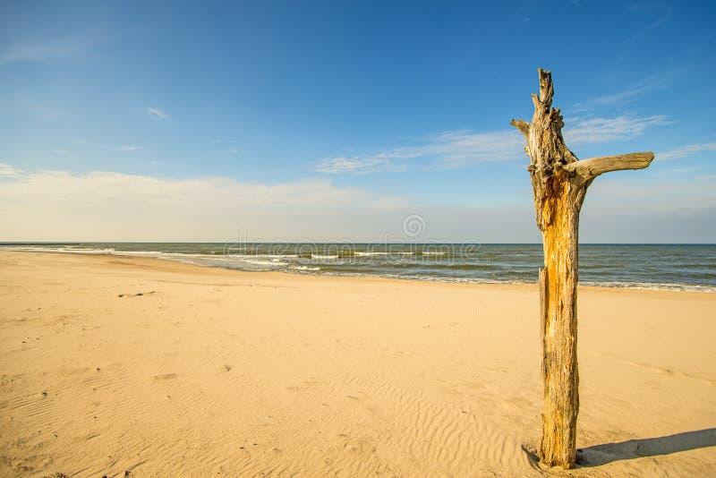 Den ensamma stranden av Östersjön med blå himmel och seglar fartyget royaltyfria foton