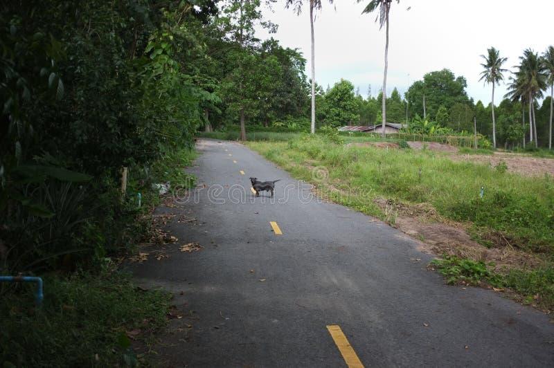 Den ensamma tillfälliga skabbhunden går på vägen royaltyfri foto