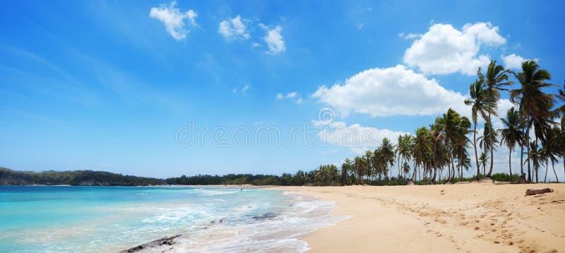 Den exotiska stranden med gömma i handflatan och guld- sander i Dominikanska republiken, royaltyfri bild