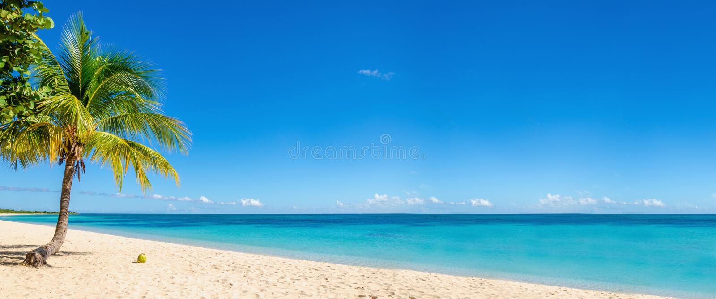 Den exotiska stranden med kokosnöten gömma i handflatan, karibiska öar royaltyfria bilder