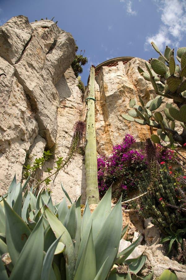 Den exotiska trädgården av Monaco royaltyfria foton