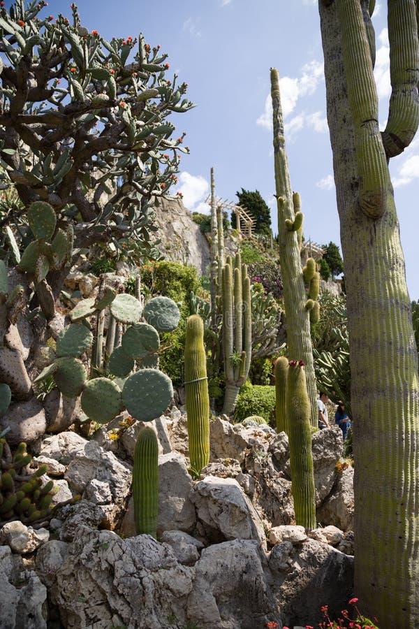 Den exotiska trädgården av Monaco royaltyfri fotografi