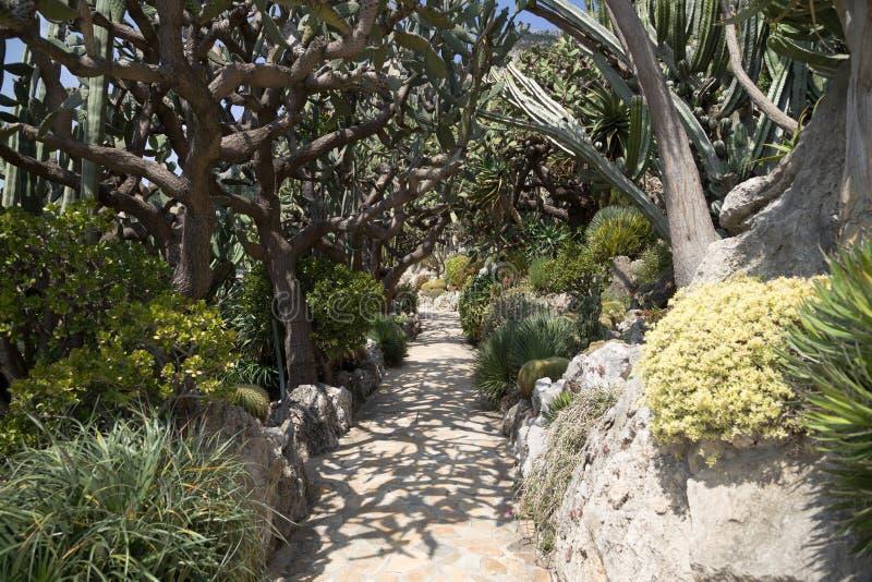Den exotiska trädgården av Monaco royaltyfria bilder
