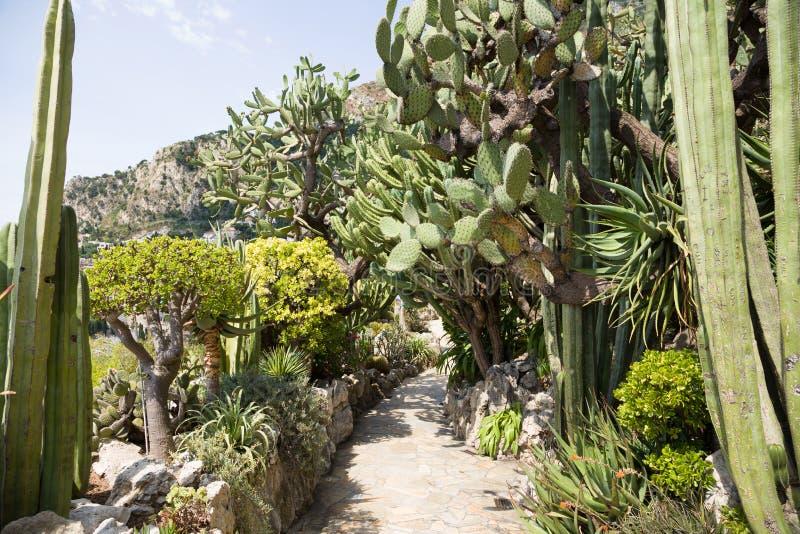 Den exotiska trädgården av Monaco royaltyfri bild