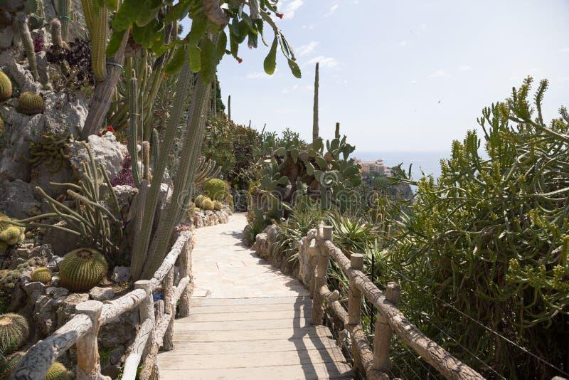 Den exotiska trädgården av Monaco arkivbild