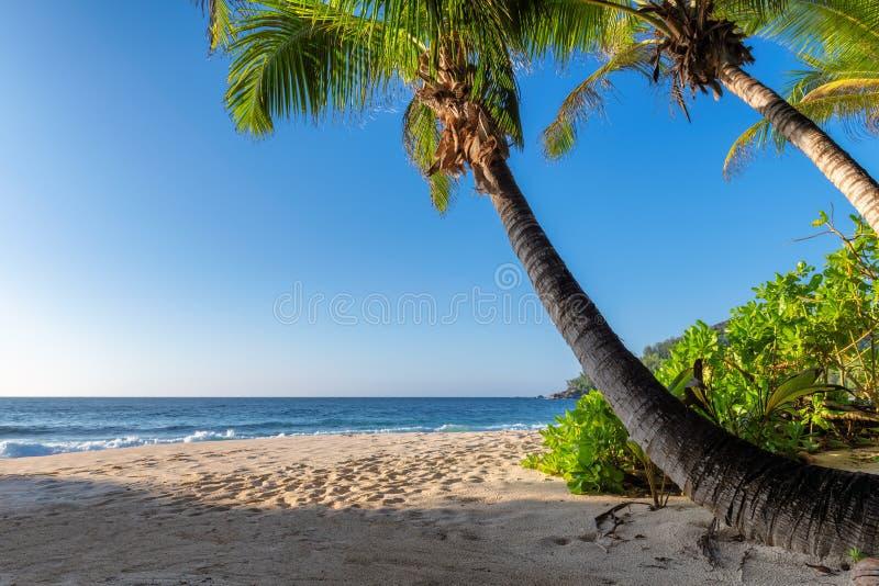 Den exotiska tropiska stranden med g?mma i handflatan och det bl?a havet p? solnedg?ngen arkivbilder