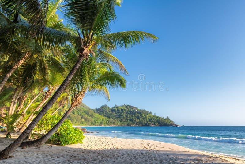 Den exotiska tropiska stranden med g?mma i handflatan och det bl?a havet p? solnedg?ngen royaltyfria bilder