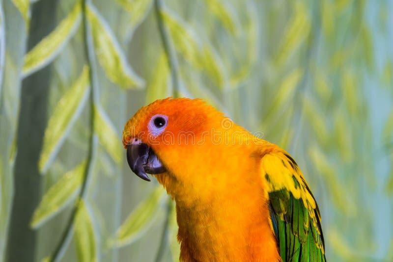 Den färgade papegojan är gult sitter ljust fotografering för bildbyråer