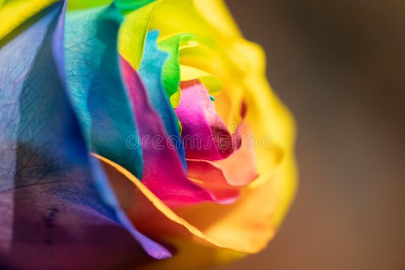 Den färgade regnbågen steg royaltyfria bilder