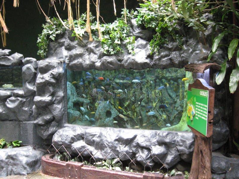 Den färgglade fisken i en fiskbehållare i det Manila havet parkerar, Manila royaltyfria bilder