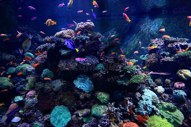 Den färgrika fisken i akvarium arkivbild