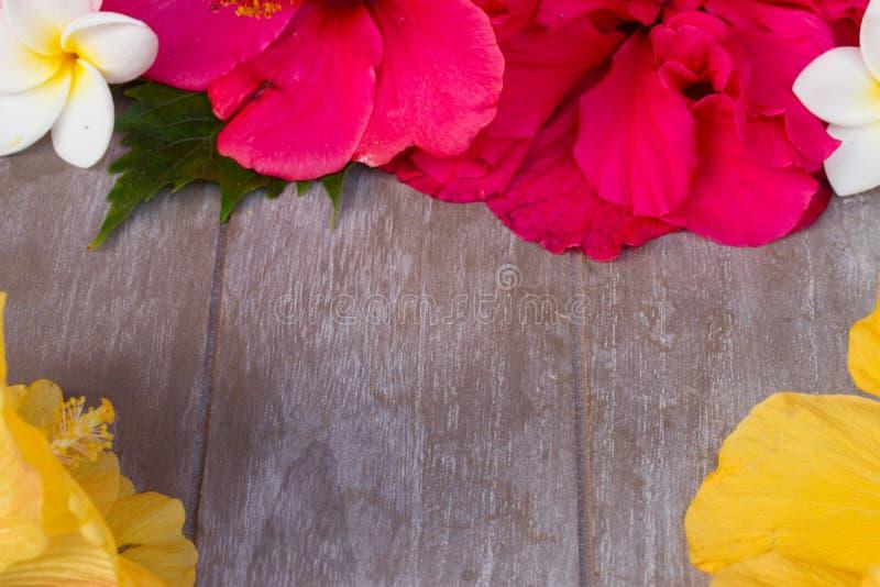 Den färgrika hibiskusen blommar med etiketten arkivbilder