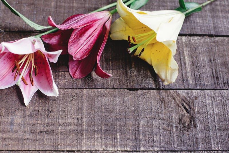 Den färgrika liljan blommar på lantlig träbakgrund ursnygg bloo royaltyfri fotografi