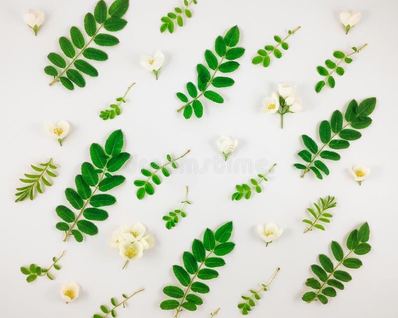 Den färgrika ljusa modellen av den trädsidor och jasmin blommar på vit bakgrund arkivbilder