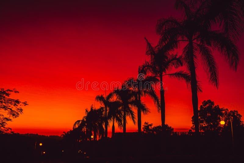 Den färgrika röda ljusa solnedgången eller soluppgång med gömma i handflatan i vändkretsar royaltyfri foto
