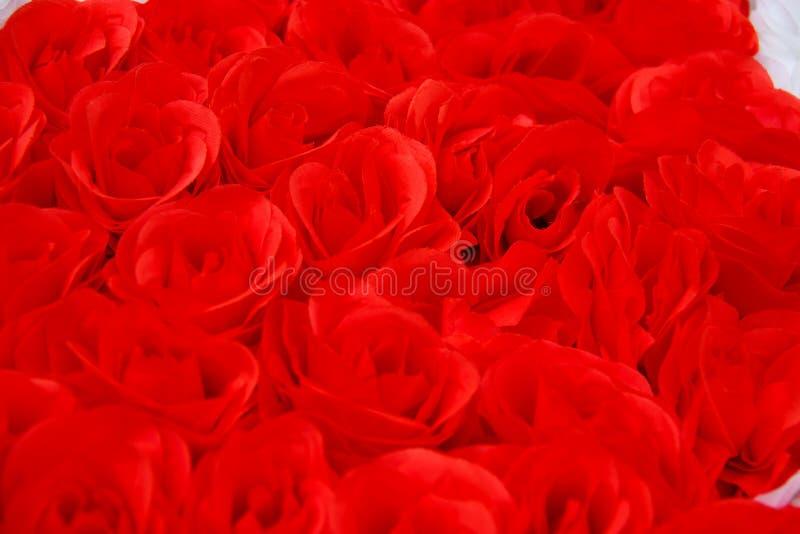 Den färgrika röda rosen blommar bakgrund för att gifta sig begrepp Abstrakt begrepp idé för inbjudankort, hälsning, lyckönskan, f royaltyfria bilder