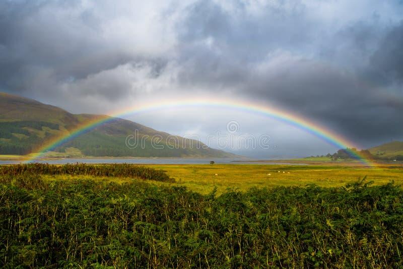 Den färgrika regnbågen över nytt betar med får på ön av Skye In Scotland royaltyfri bild