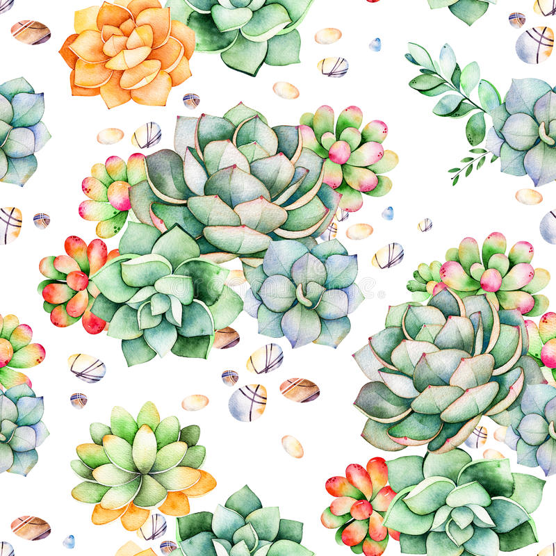 Den färgrika sömlösa modellen med suckulentväxter, kiselstenstenar, förgrena sig royaltyfri illustrationer